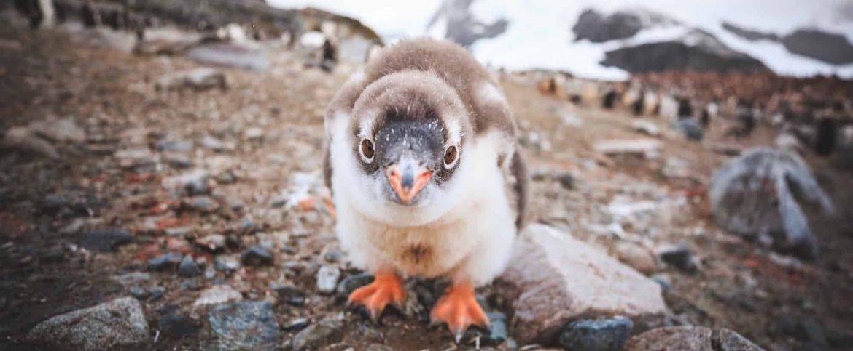 Кто хочет поехать со мной в Антарктиду?