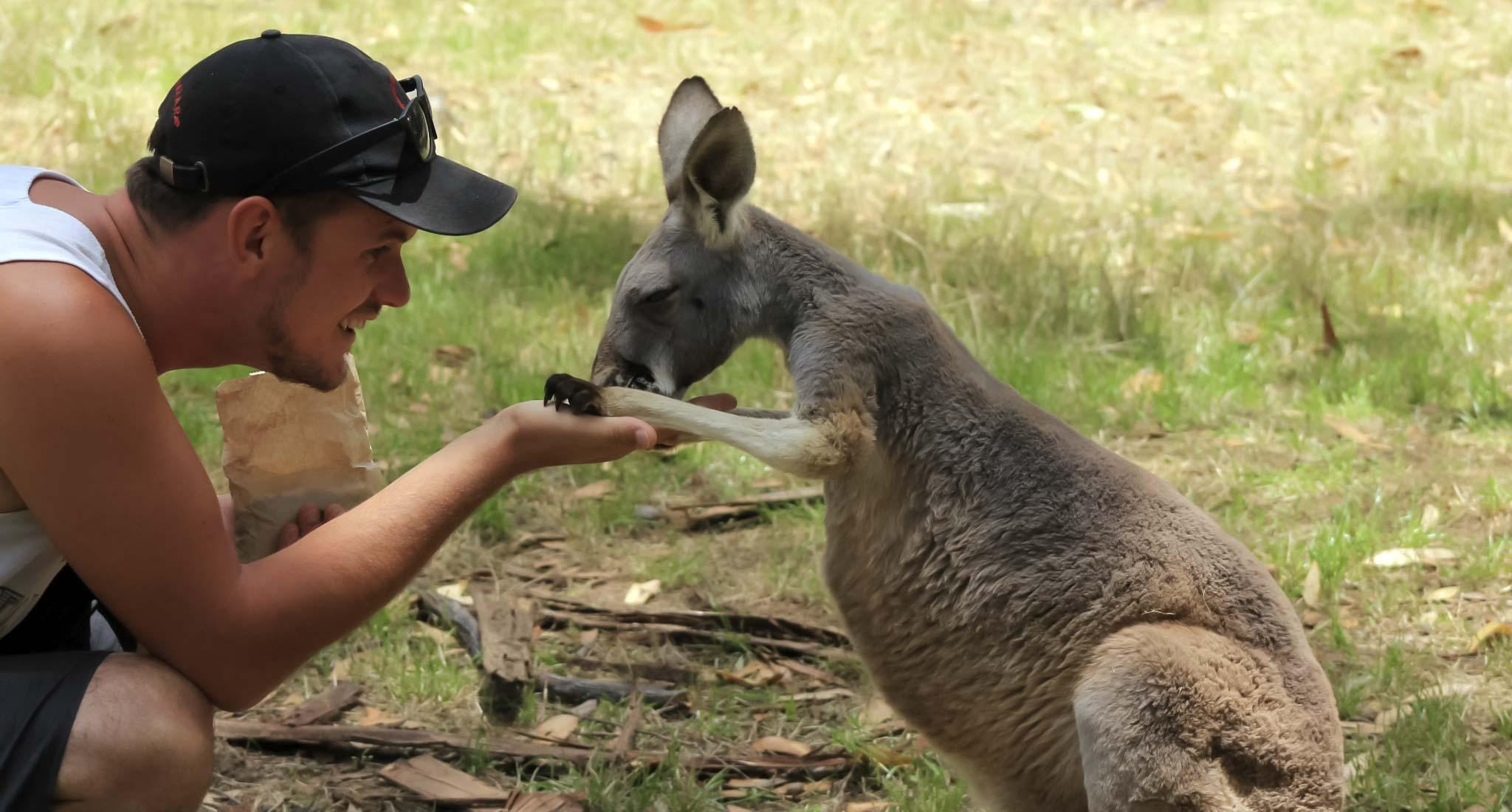 Кенгуру с Дэном [19659021] Встреча с местными жителями недалеко от Аделаиды  </div> <h2> 5. Проведите время с «Русами и Коалами»</h2> <p>Ни один список путешествий по Австралии не будет полным без встреч с пушистыми друзьями. Конечно, вы не ограничены одним конкретным местом, чтобы встретиться лицом к лицу с этими местными жителями. Парк Коала на Магнитном острове предлагает встречи с близкого расстояния, а на Великой океанской дороге вы, вероятно, заметите некоторых на деревьях с хорошими глазами.</p> <p>Что касается кенгуру, опять же не спускайте глаз, но для меня парк недалеко от Аделаиды была выдающимся опытом для их встречи, поскольку они размещены в огромном природном парке для их защиты из-за близости к городской черте.</p> <div id=
