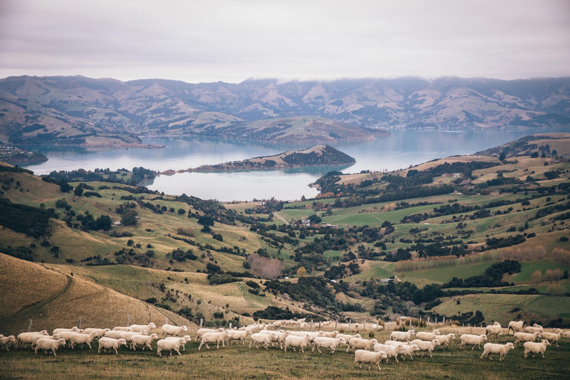 покидать Новую Зеландию во время COVID