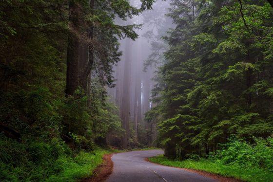 Путешествие на природу в одиночку NorCal