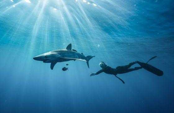 Кабо-сан-лукас плавает акула