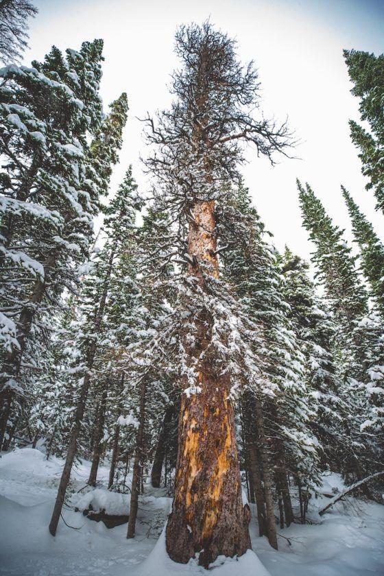 Национальный парк Роки-Маунтин зима