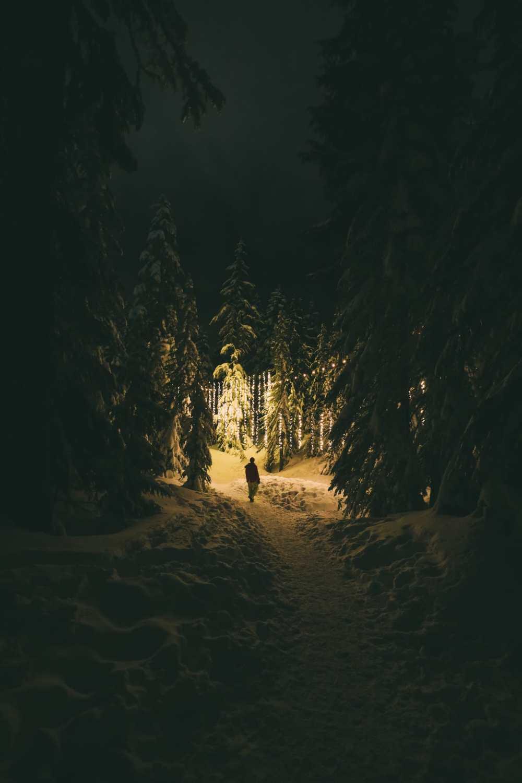 Места, которые стоит увидеть по дороге из Ванкувера в Калгари (3) [19659044] В поисках медведей гризли на горе рябчиков ... В Ванкувере, Канада (48)
