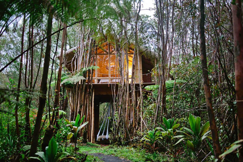 Мечтательный тропический домик на дереве Гавайи Airbnb