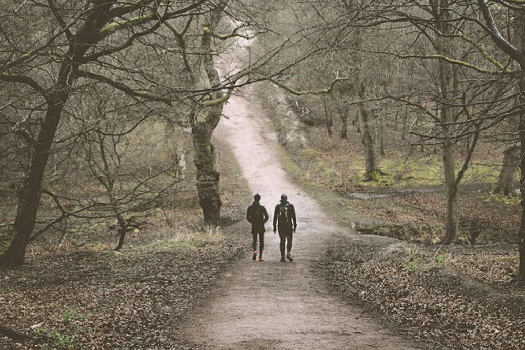 Прогулки по лесу Эппинга