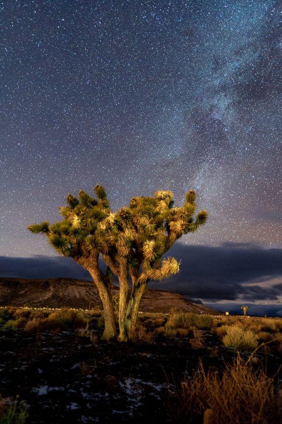 Деревья Джошуа в Неваде