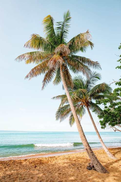 Чем заняться в Пуэрто-Рико (26)