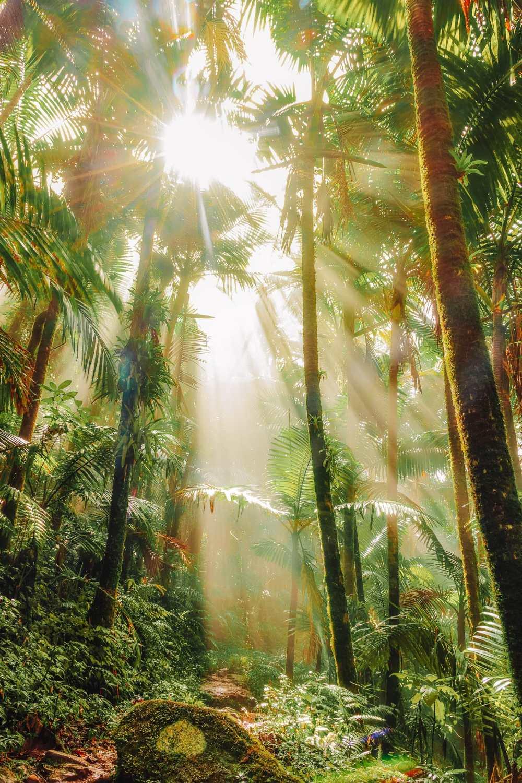 Лучшие места для отдыха Do In Puerto Rico (15)