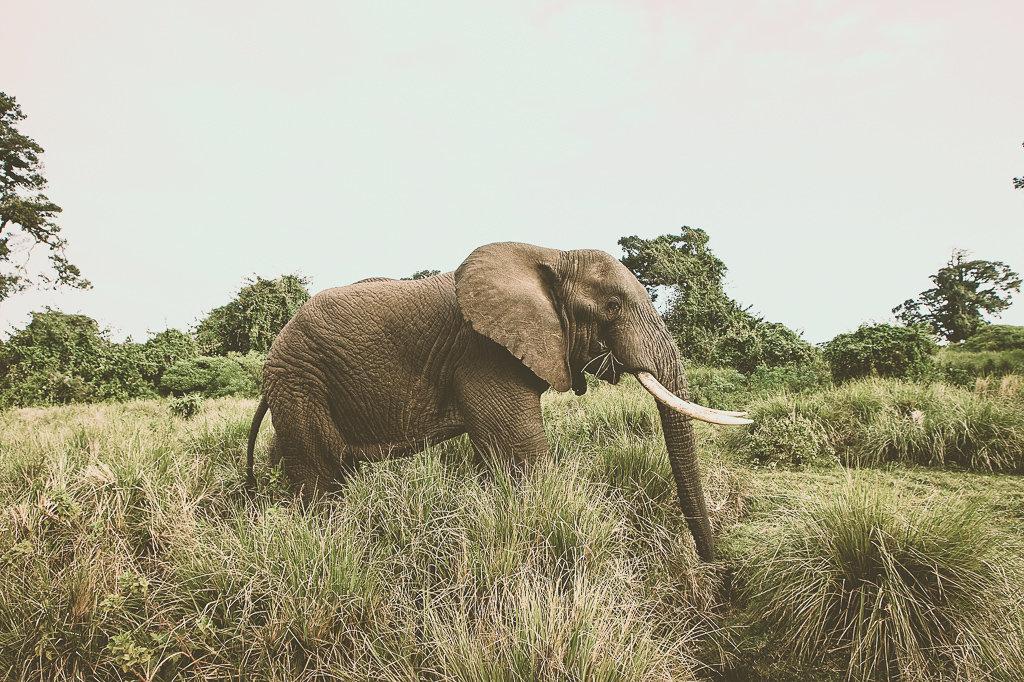 НИКОГДА не катайтесь на слонах и только наблюдайте за ними в диких, если только в специальном и этическом заповеднике.