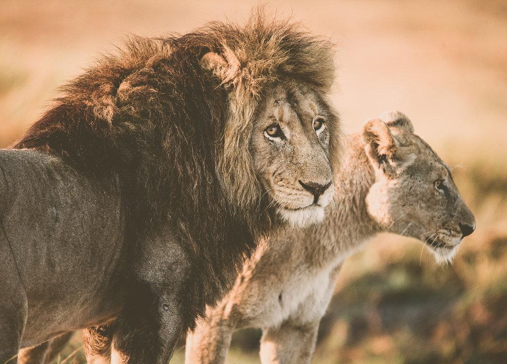 Наблюдайте за животными в их естественной среде обитания.