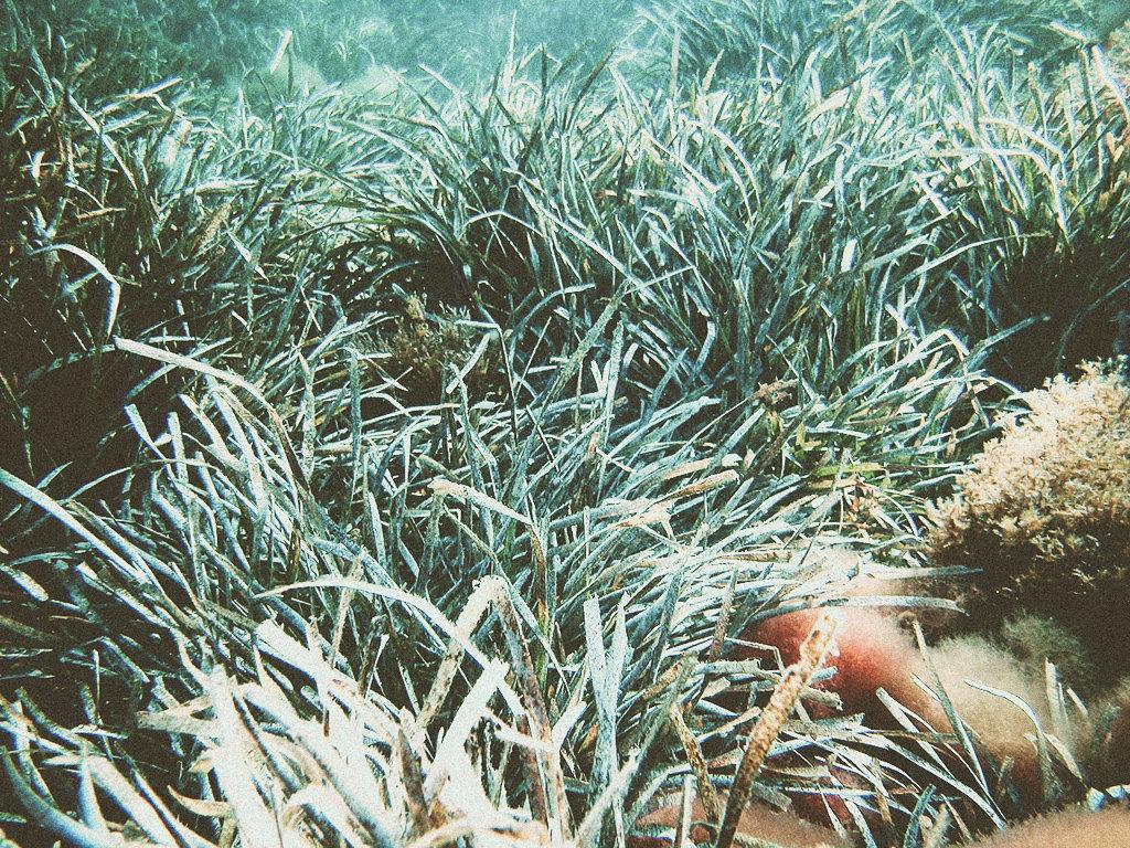 Защита средиземноморских водорослей Посидония вокруг островов