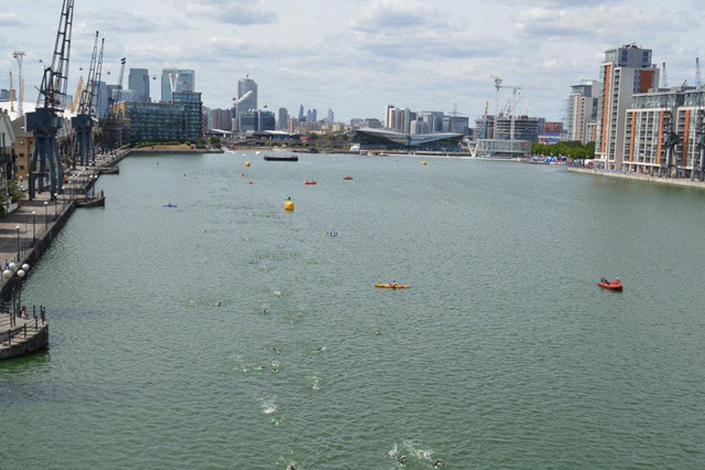 Плавание на открытой воде в Королевских доках в Лондоне