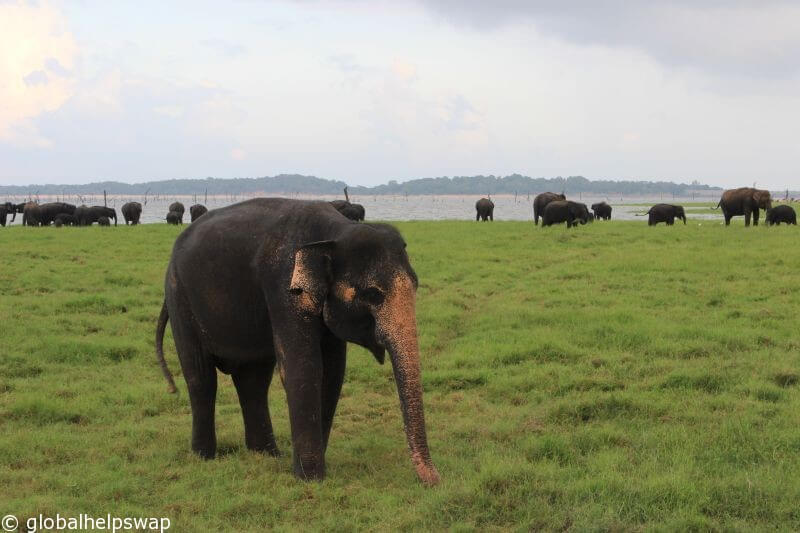 Дикая природа Шри-Ланки