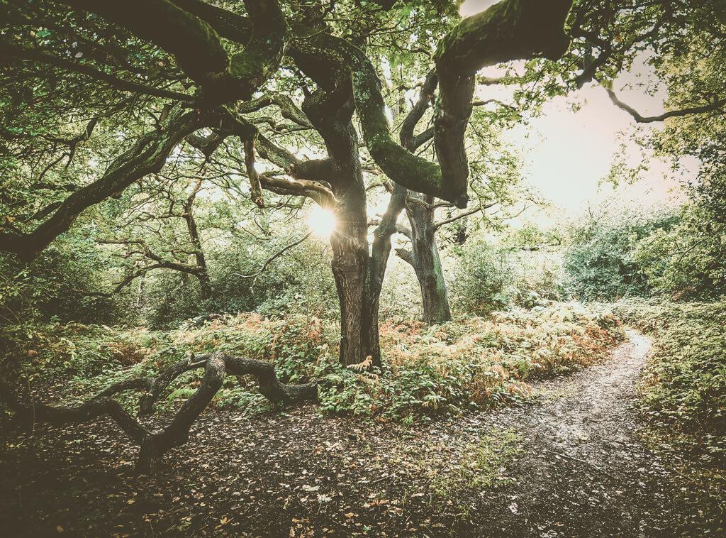 Лучшие Развлечения в Epping Forest,