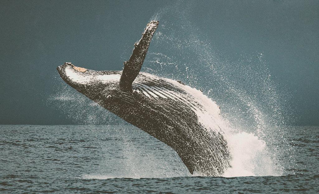 Наблюдение за китами в Великобритании