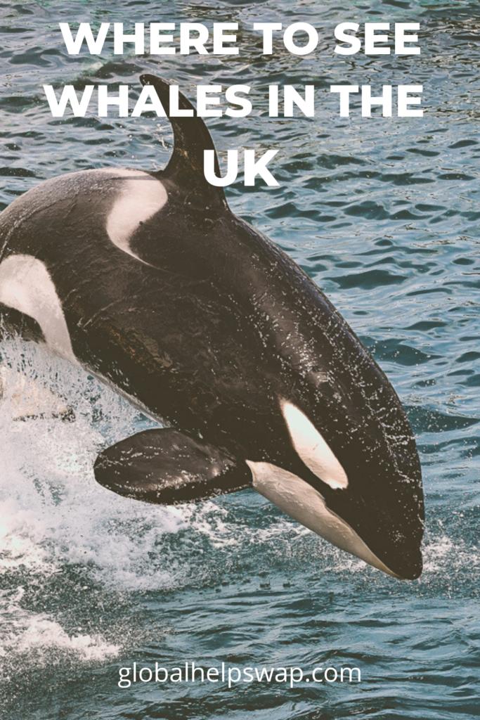 Где можно увидеть китов и дельфинов в Великобритании.