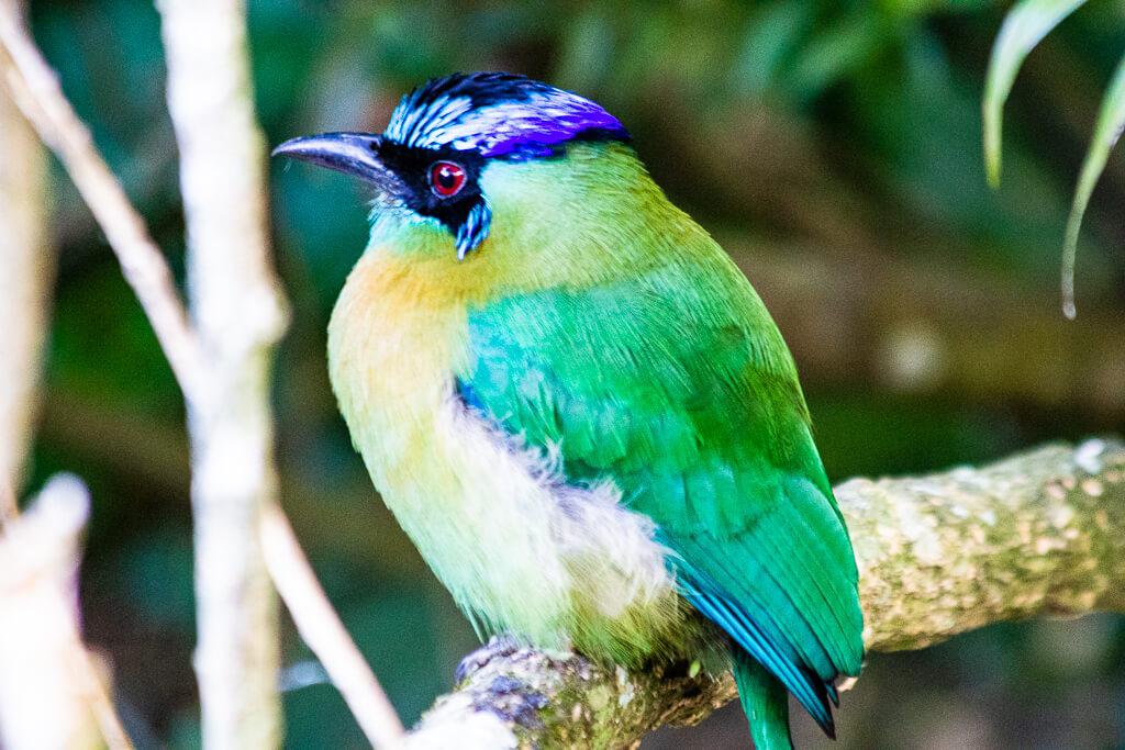 Биологический заповедник Боске Нубосо Монтеверде (Биологический заповедник Монтеверде Облачный лес)