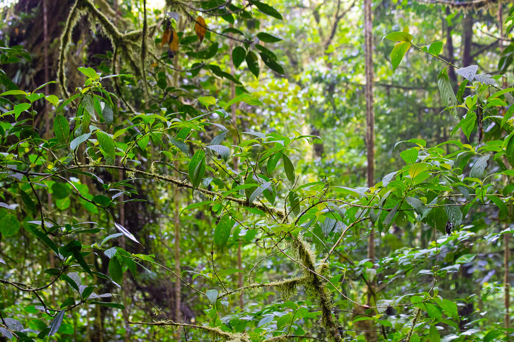 Santuario Ecologico