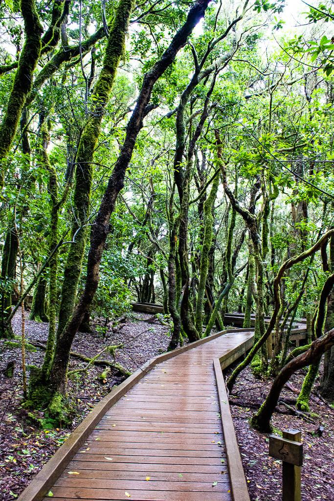 Устойчивый туризм на Тенерифе