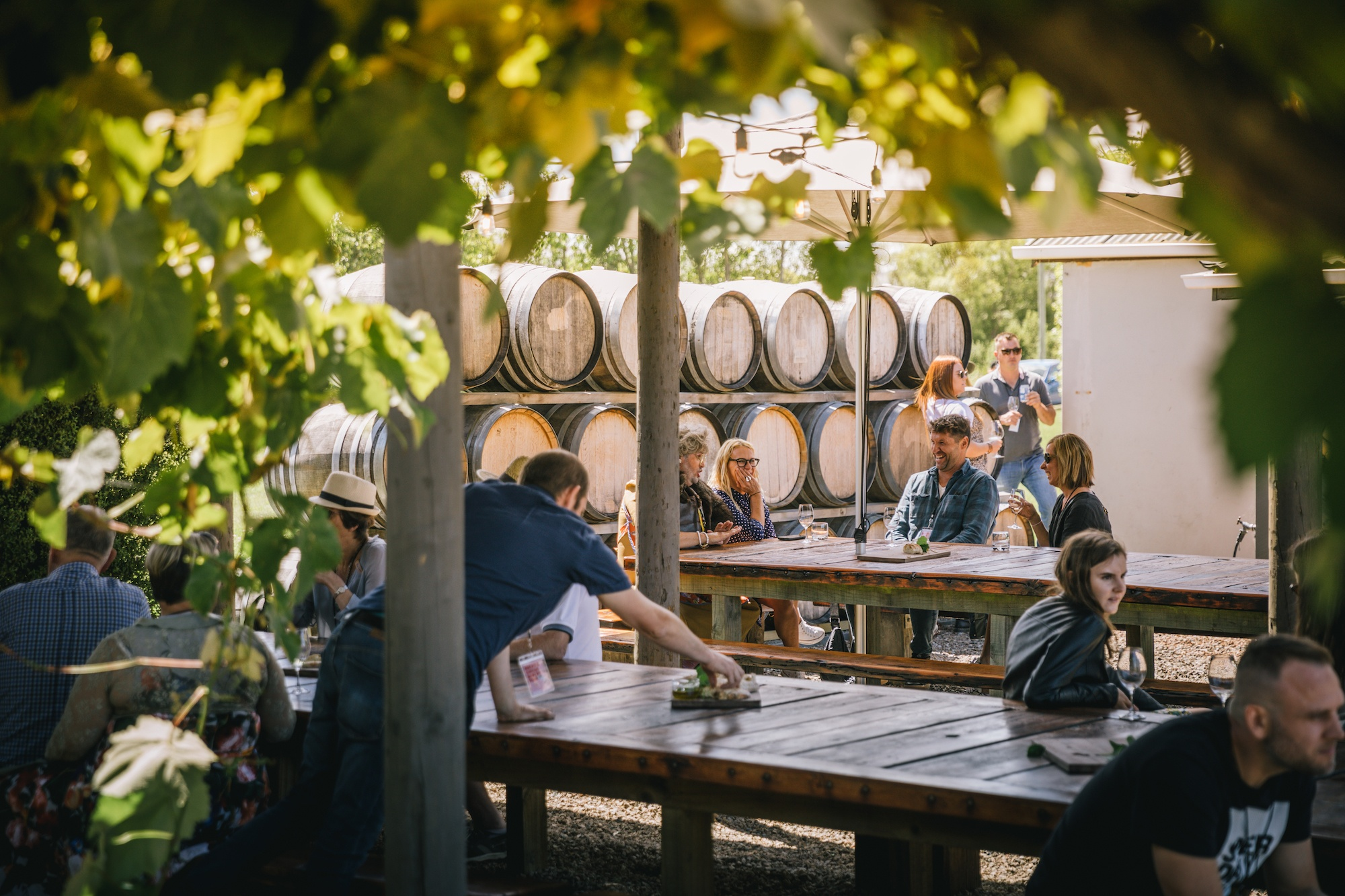 виноградники северного Кентербери