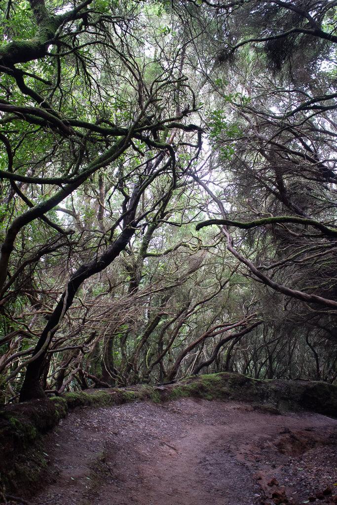 Сельский парк Анага, Тенерифе