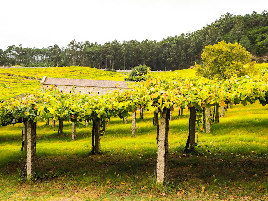 Дегустация вин в Галисии