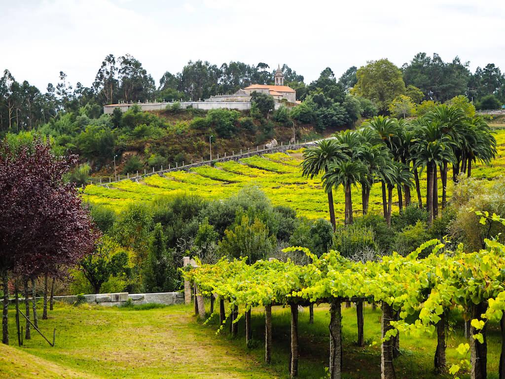 Экскурсия по виноградникам в Галисии