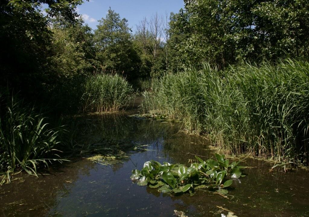Природный парк Камли-стрит, Кингс-Кросс