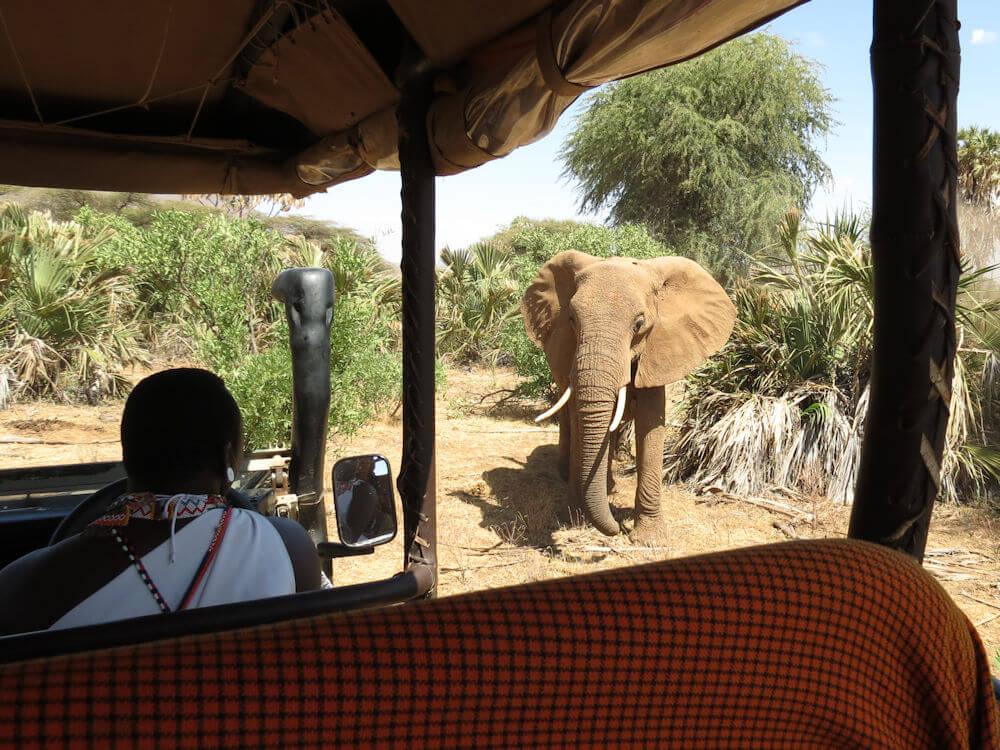 На сафари в Кении, Африке