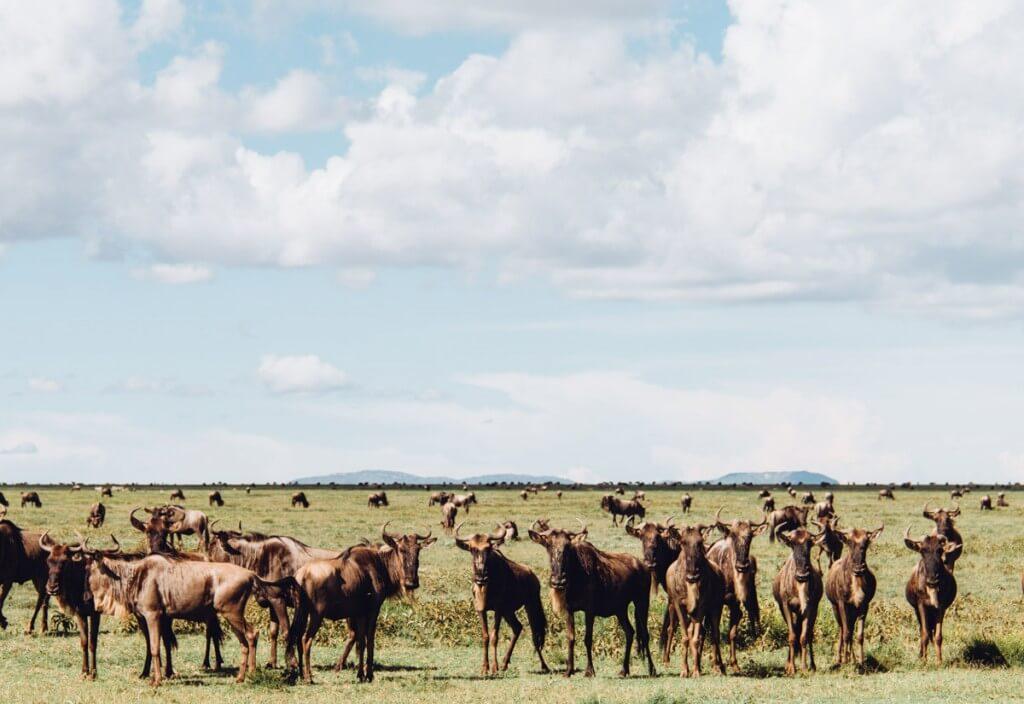 Танзания, Африка
