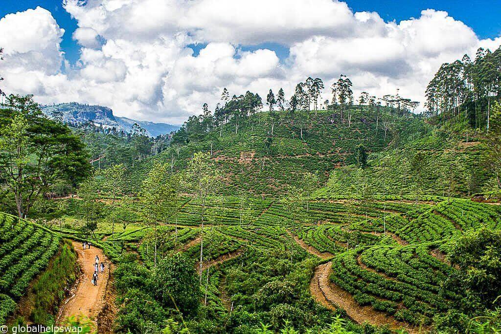 Погода в Шри-Ланке - когда лучше всего посетить Шри-Ланку