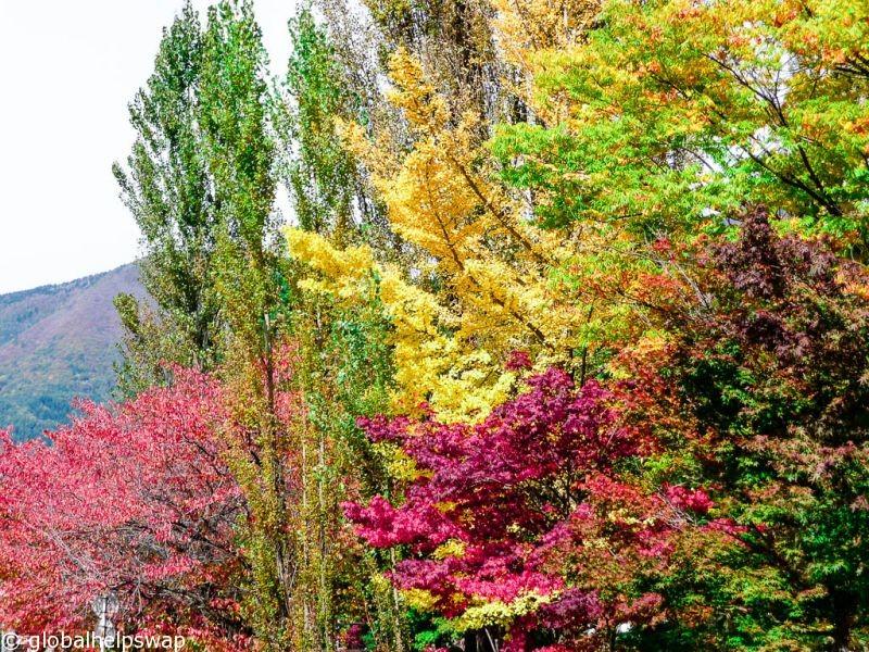 Кавагутико посетит гору Фудзи