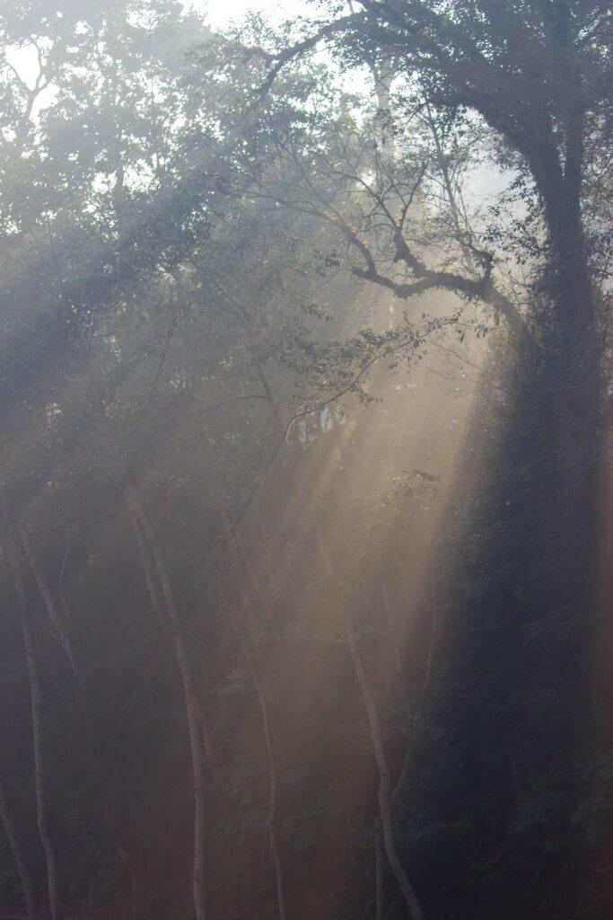 Прогулка по лесу на Gokarna Forest Resort Катманду [19659028] Прогулка по лесу на курорте Gokarna Forest Resort Kathmandu