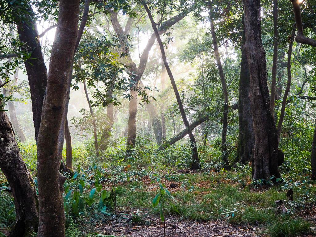 Лесной курорт Гокарна Катманду