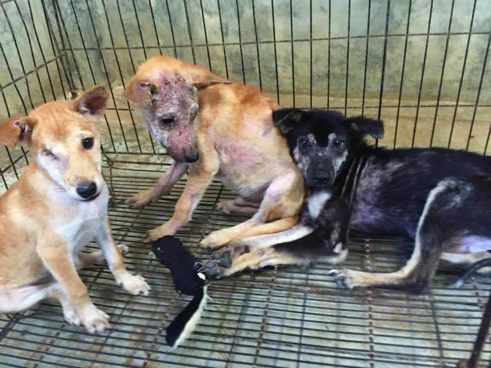 Помощь собакам в Lanta Animal Welfare