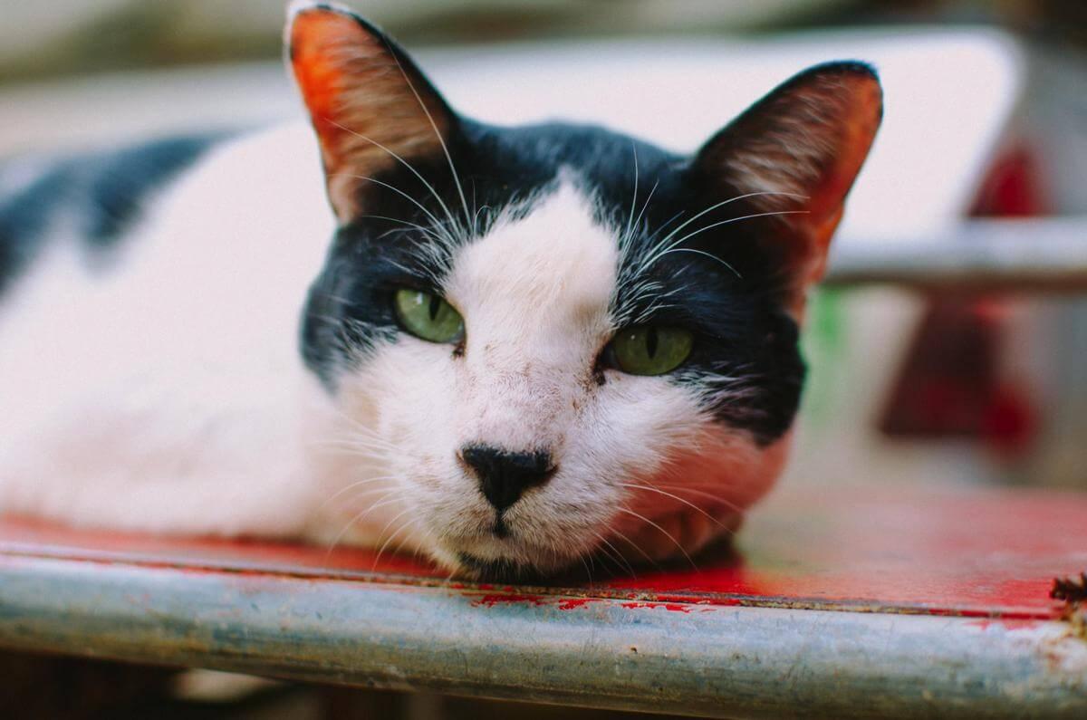Кошки в Lanta Animal Welfare