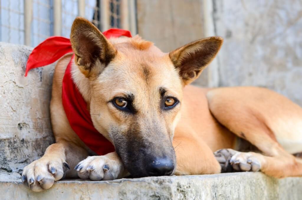 Собака в Lanta Animal Welfare