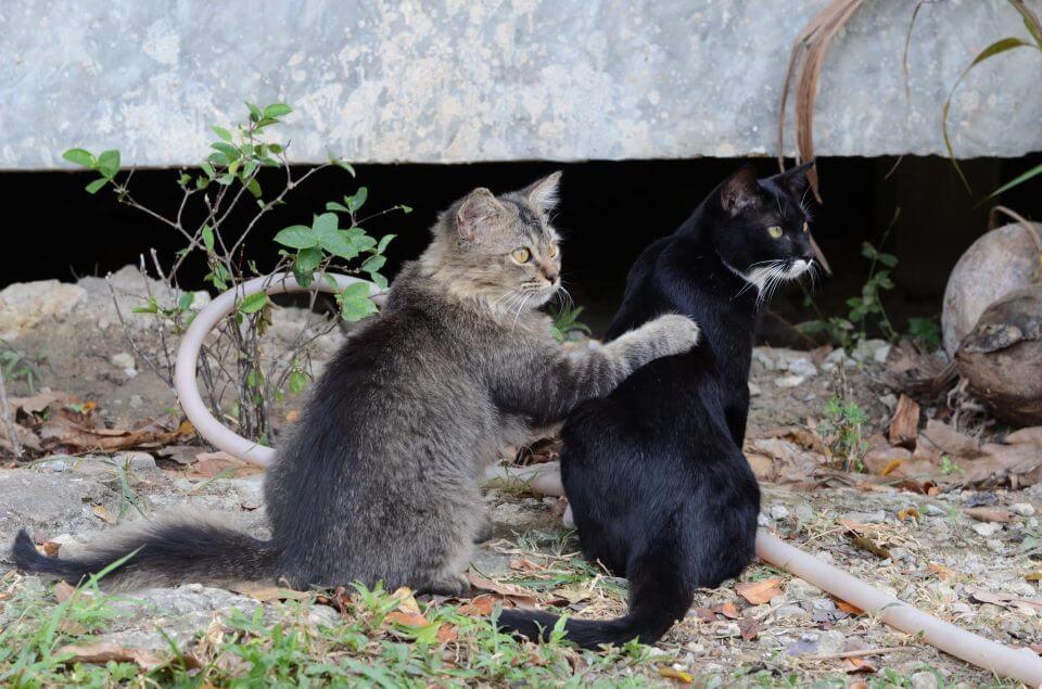Счастливые кошки в Lanta Animal Welfare