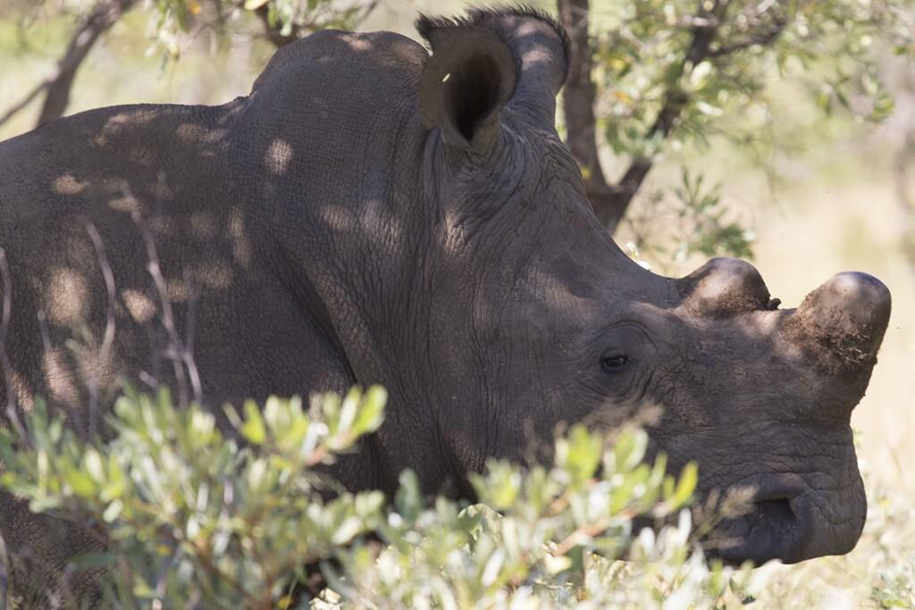Носороги в Зимбабве