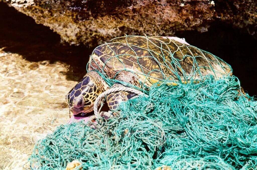 Черепаха в обломки