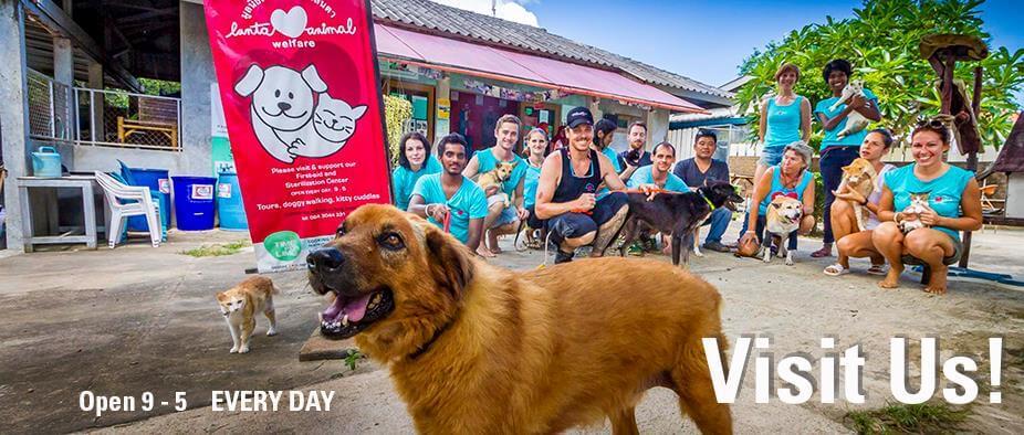 Добровольцы Lanta Animal Welfare