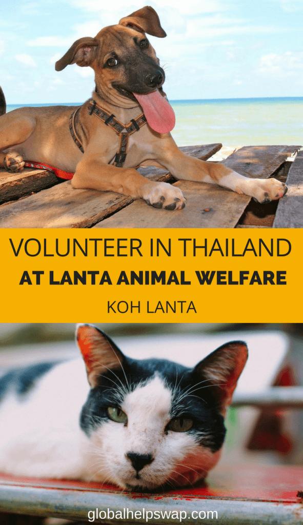 Станьте волонтером в службе защиты животных Ланта и помогайте уличным собакам и кошкам на острове Ко Ланта, Таиланд [19659041] Станьте волонтером в службе защиты животных Ланта и помогайте уличным собакам и кошкам на острове Ко Ланта, Таиланд