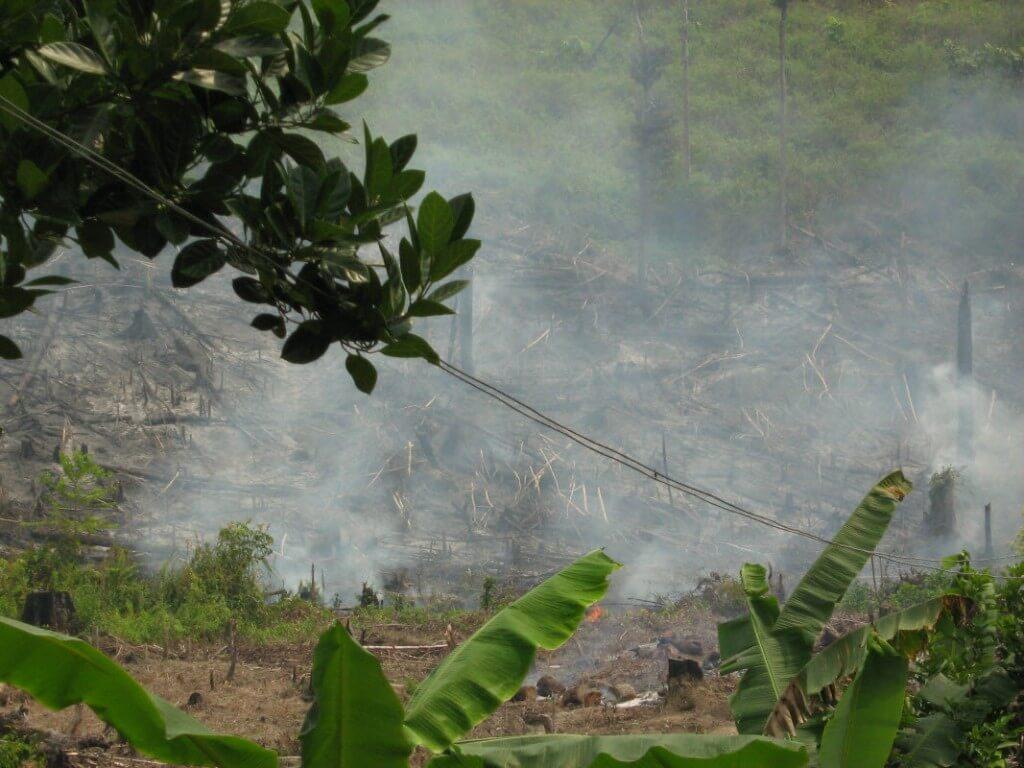 Орангутанг Утрата среды обитания в Индонезии
