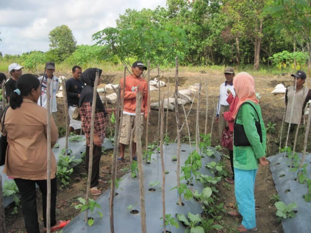 Работы по сохранению в Индонезии