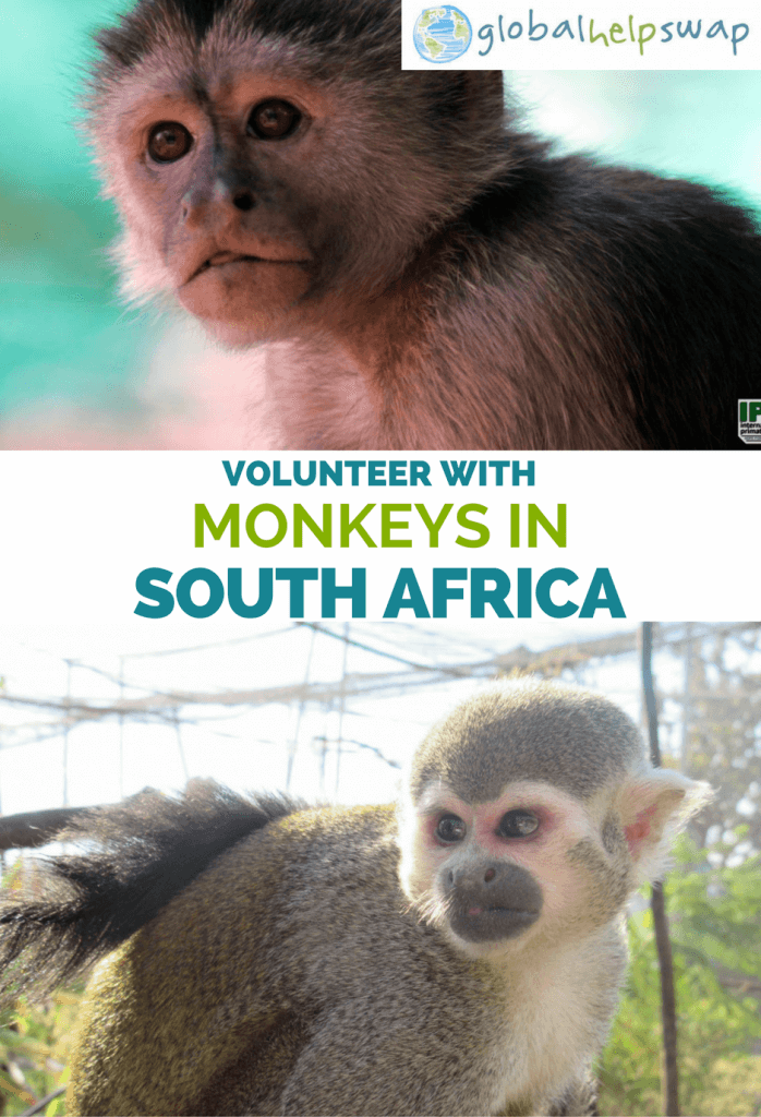 Волонтер с обезьянами в Южной Африке