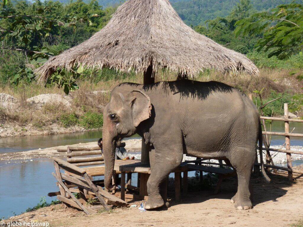 добровольно со слонами