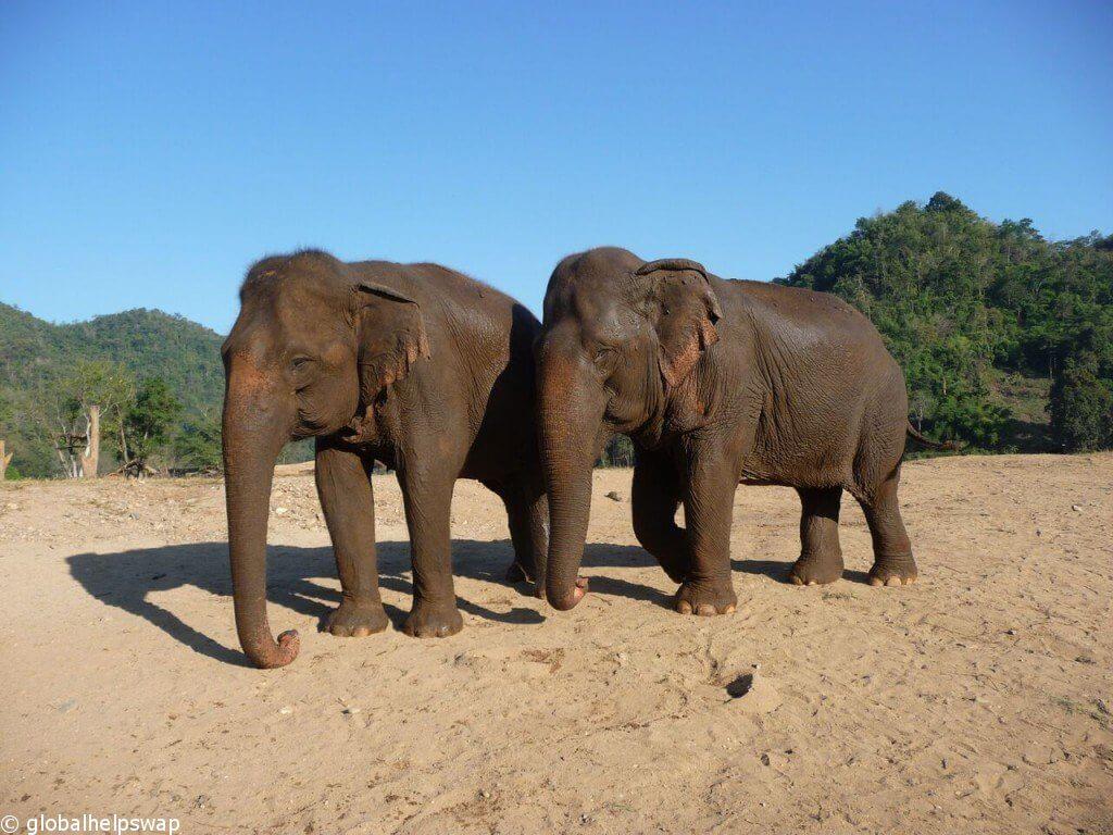 волонтер со слонами