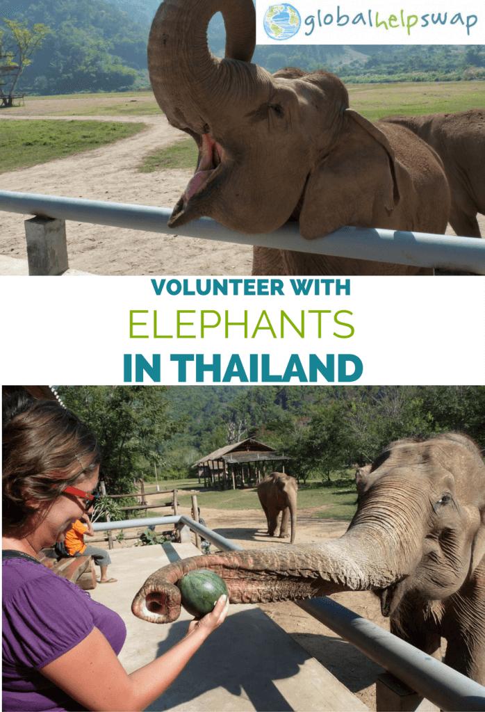 Если вы хотите стать волонтером. со слонами в Таиланде, тогда посмотрите этот пост. Станьте волонтером всемирно известного природоохранного проекта в Чиангмае, Таиланд