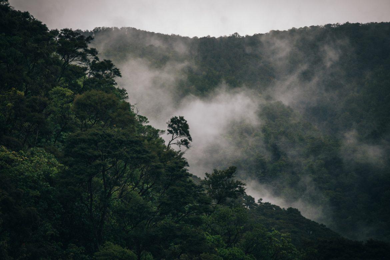 8 экологических заповедников Новой Зеландии, которые нельзя пропустить этим летом в Новой Зеландии