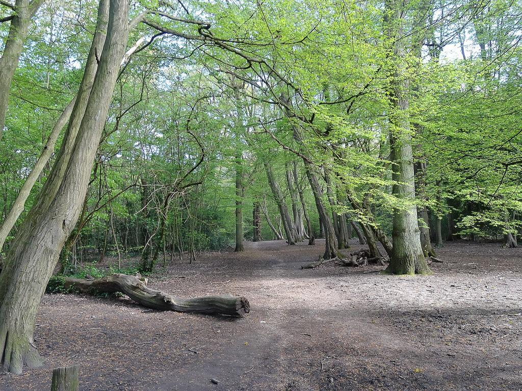13 лучших садов и парков северного Лондона